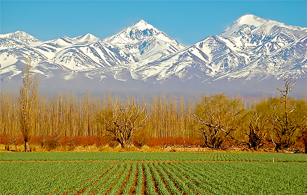 Mendoza Vineyard with mountain view, in Argentina. Photo credit: Zicasso